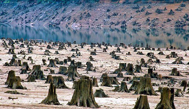 Bosque nacional de Willamette, Oregon (EE.UU.), el 99% deforestado