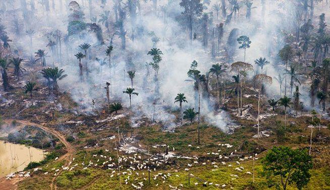 "Parte de la selva amazónica en Brasil, incendiado a ser ""reutilizado"""