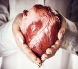 Científicos de EEUU generan un músculo cardíaco a partir de prepucio humano