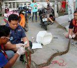 Esta serpiente sorprendió a un hombre tras salir del inodoro y morderlo