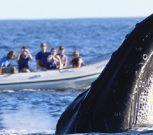 Búsqueda y avistamiento de cetáceos en las costas uruguayas