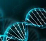 El ADN neandertal aún influye en la expresión del gen humano, dice un estudio