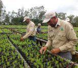Maderas del Orinoco arriba a 29 años promoviendo el desarrollo forestal