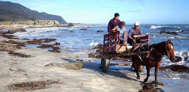 Isla Mocha y su espectacular reserva nacional