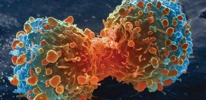 Logran crear virus que atacan de forma selectiva a las células tumorales