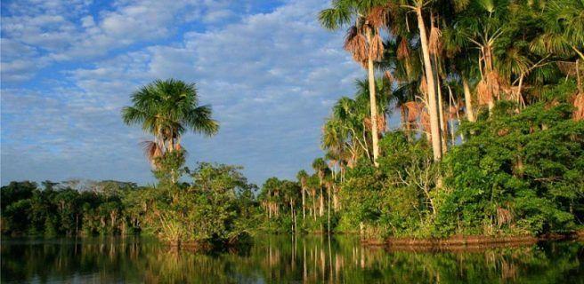 Valiosa biodiversidad peruana en la reserva Nacional Tambopata
