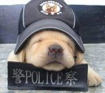 Cachorros se unen a la policia de Taiwan