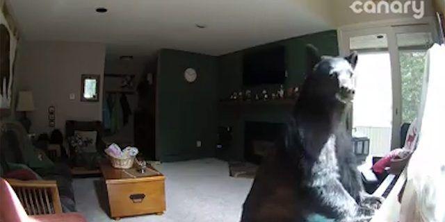 Oso entra a una casa y se pone a tocar el piano de la familia