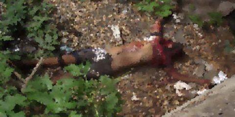 Hallaron cadáver debajo de un puente