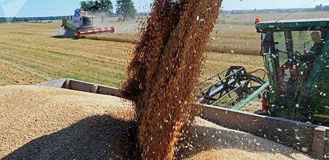 Rusia enviará pronto primer cargamento de trigo a Venezuela