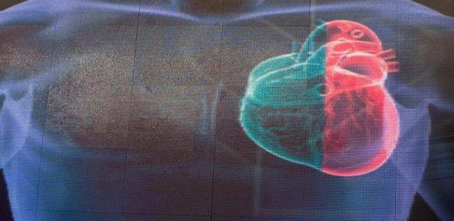 Embriones humanos: reparan mutación en gen que causa miocardiopatía hipertrófica