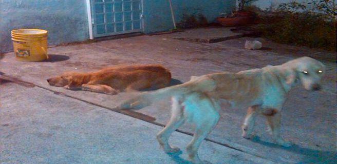 Aumenta numero de perros de razas abandonados en Aragua