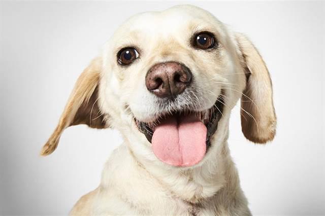 Doghero te permite buscarle hogar a perros sin hogar mediante una app