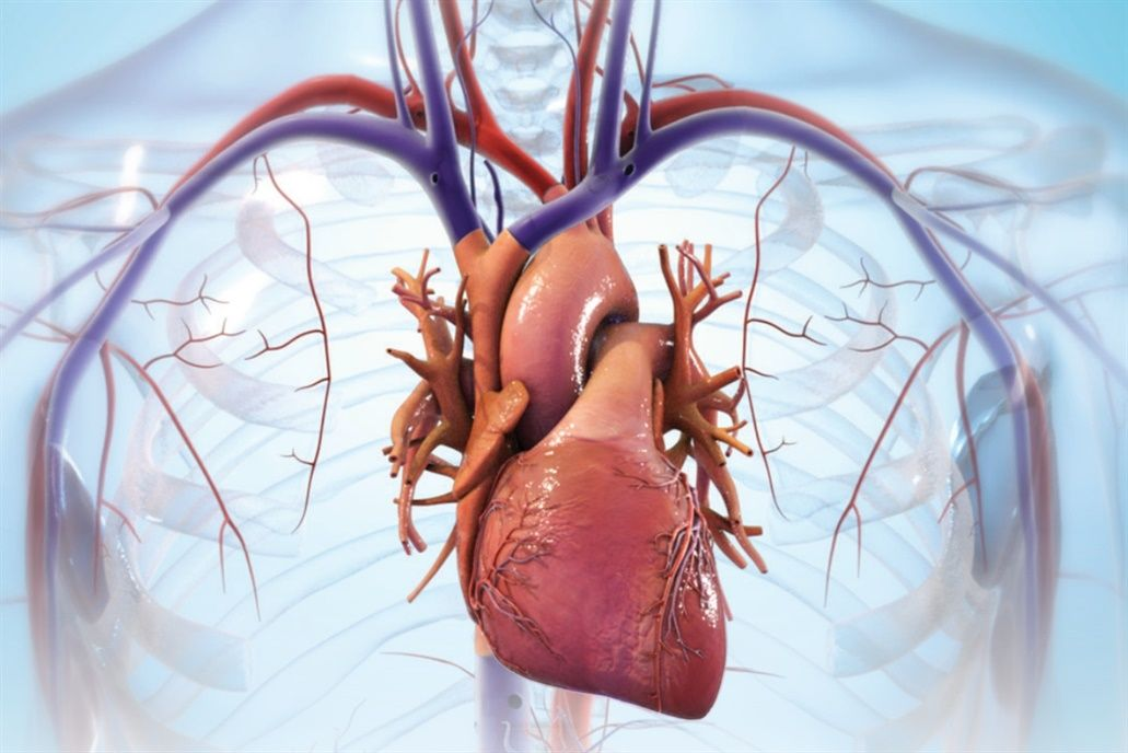 Un corazón puede ser impreso 3D con el mismo funcionamiento que el de uno normal